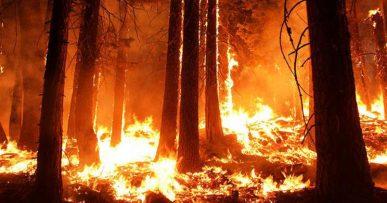 Skovbrand i Californien