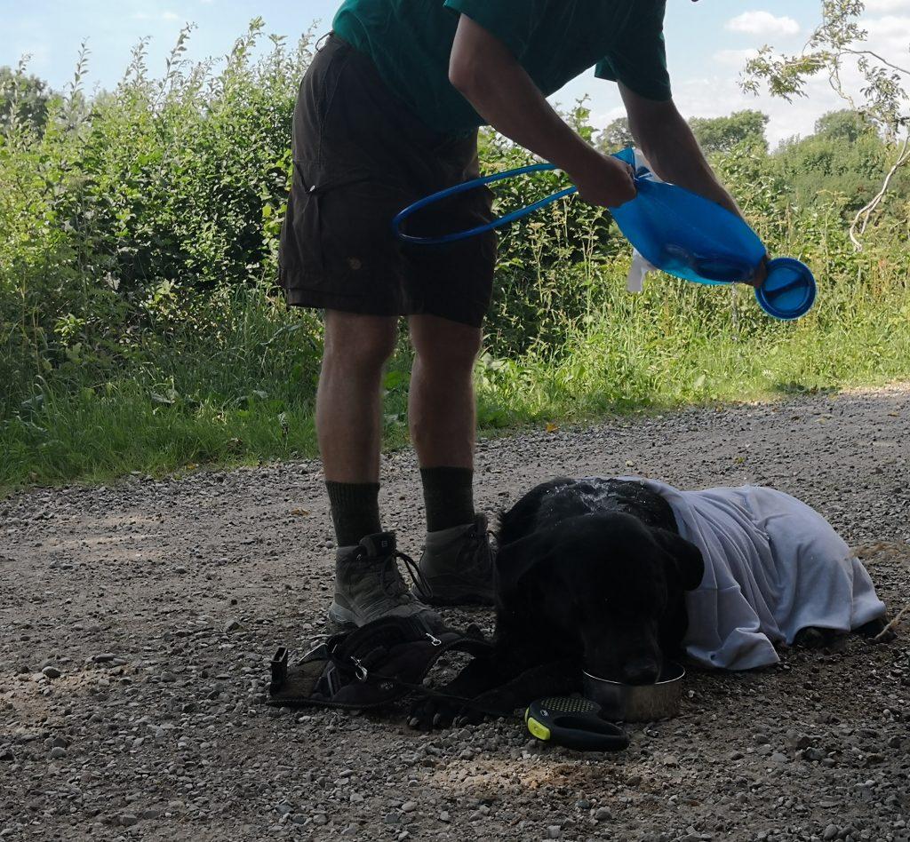 Førstehjælp til overophedet hund