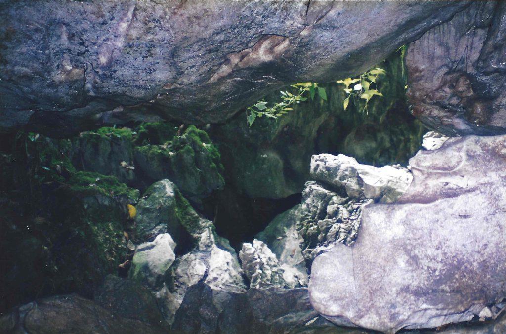 Flagermusgrotte i Taman Negara