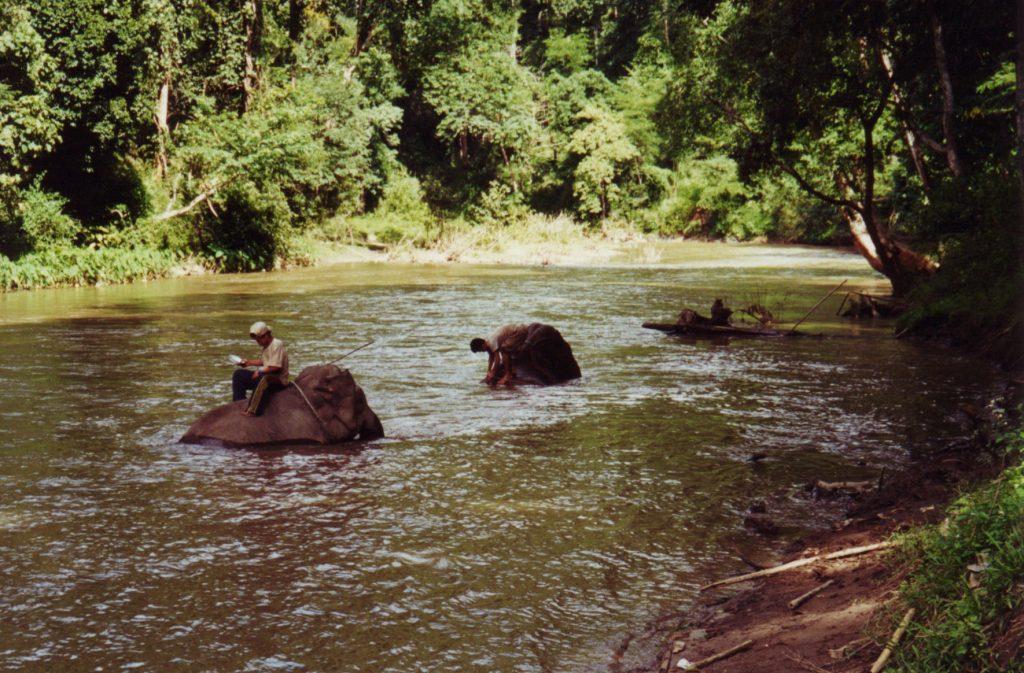 Elefanterne afkøles inden turen gennem skoven